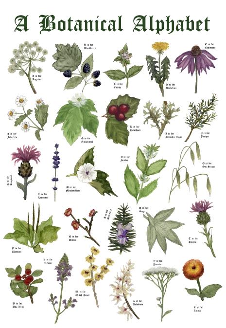 botanicalalphabet
