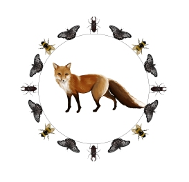 FoxMandalatransparent