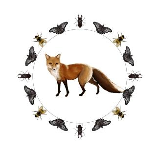 FoxMandalatransparent